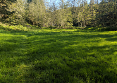 Middleground field