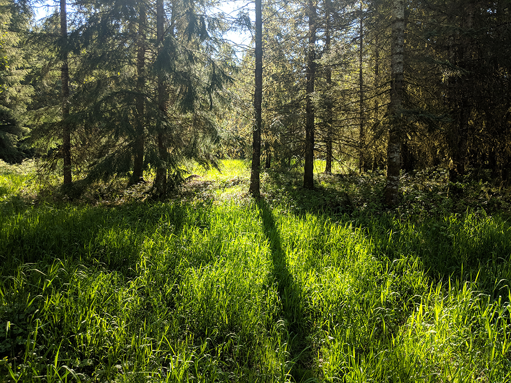 Middleground image trees LARP