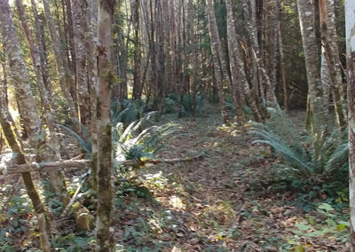 Middleground LARP Site path