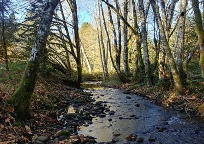 Seattle LARP Site creek