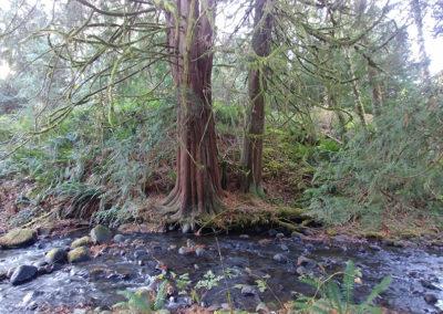 Seattle LARP Site creek Middleground