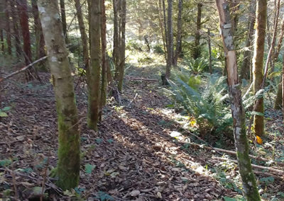 Seattle LARP Site path