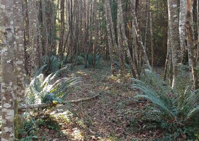 Seattle LARP Site path Middleground